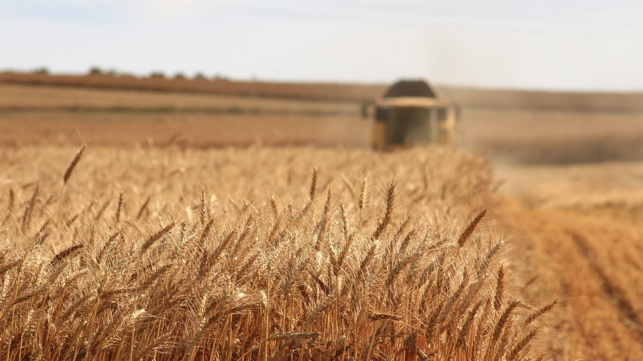 Close up shot of crop field with machinery in the background